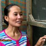 Ibu Pujiyanti penangkar Murai Batu Medan (youtube.com)