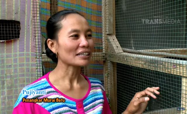 Nekat Jual 2 Ekor Sapi Untuk Beli Murai Batu, Ibu Ini Jadi Sukses