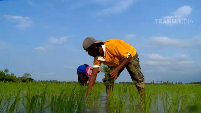 Lahan 1 hektar dari hasil ternak Murai Batu Medan (youtube.com)