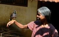 Burung Jalak bisa bicara seperti manusia (pinterest.com)