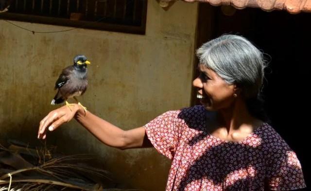 Video 5 Jenis Burung Jalak yang Bisa Bicara Seperti Manusia