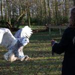 Cara Menjinakkan burung Hantu Liar dan Galak (pinterest.com)