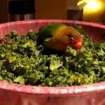 10 Jenis Tanaman Hijau yang Baik Untuk Lovebird dan Kenari