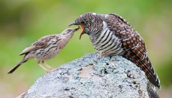8 Jenis Burung Yang Penuh Mitos Sebagian Bikin Merinding Burungnya Com