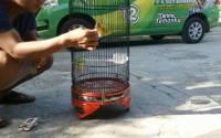 Manfaat Bayam untuk Burung Lovebird Kusumo (youtube.com)
