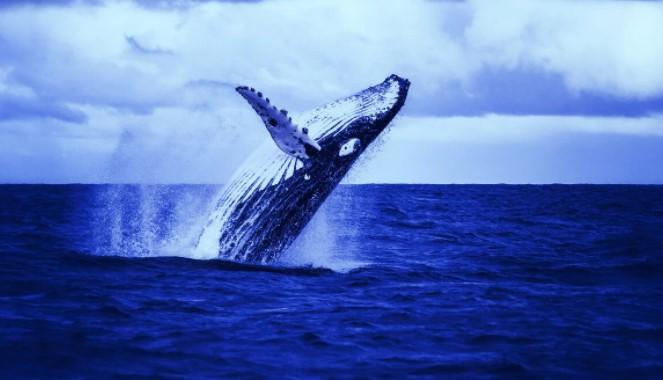 Lee más sobre el artículo Las ballenas más grandes de Bitcoin están en declive