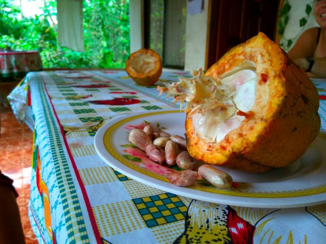Fruto de cacao en Rancho Raíces