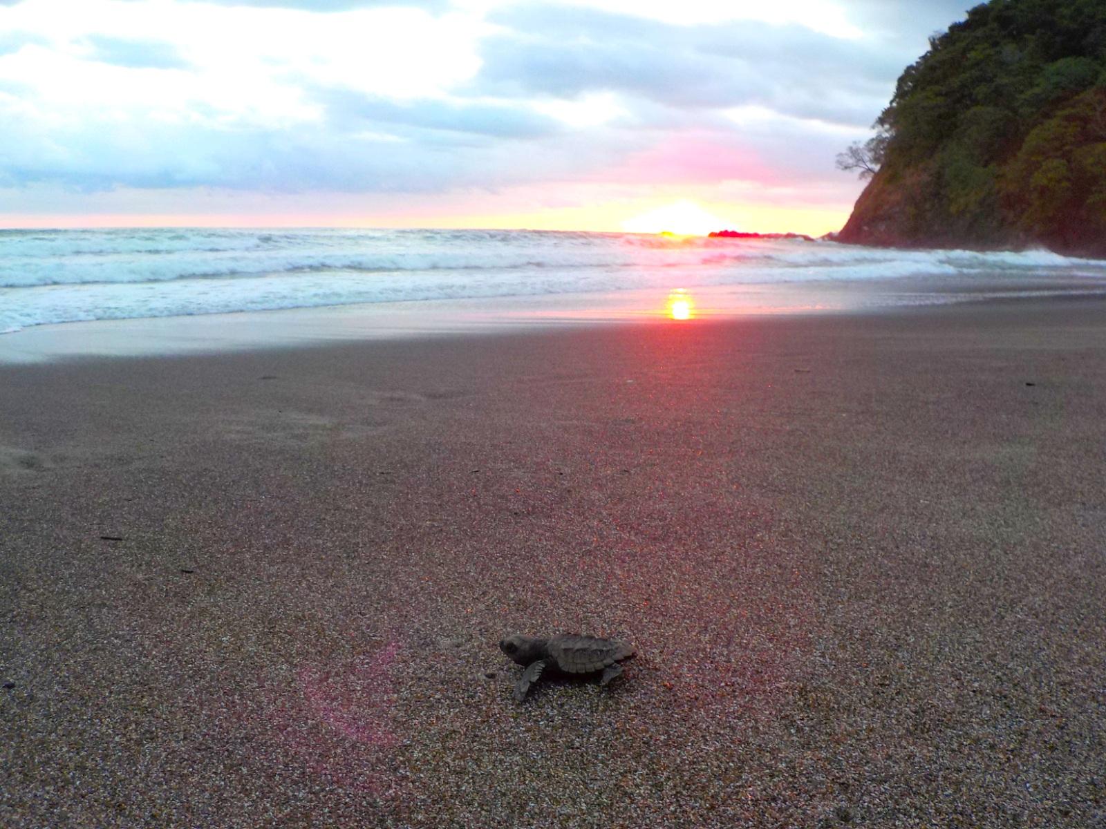 Playa Corozalito, Guanacaste Costa Rica