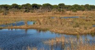 Que veer en Doñana