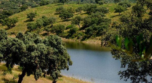 Parque Natural Sierra de Hornachuelos - Buscarutas.com