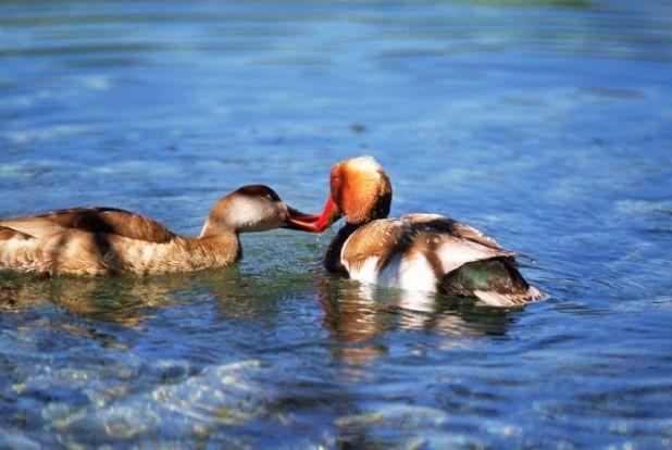Que ver en las Lagunas de Ruidera