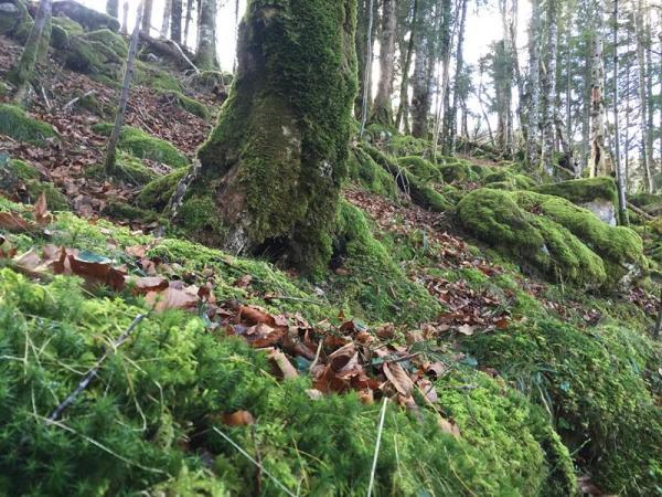 ruta por la Sierra de Leyre