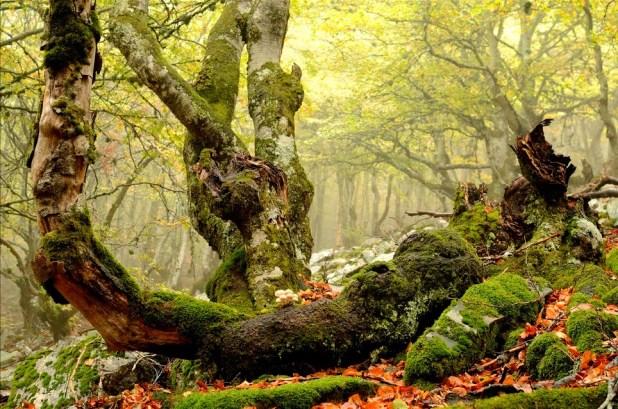 Bosques de la Pedrosa
