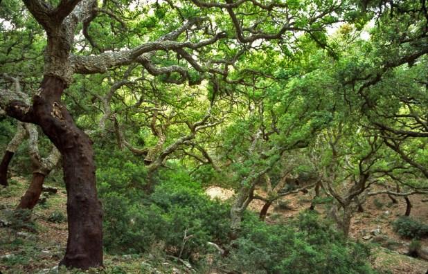 ruta por el Parque Natural de los Alcornocales