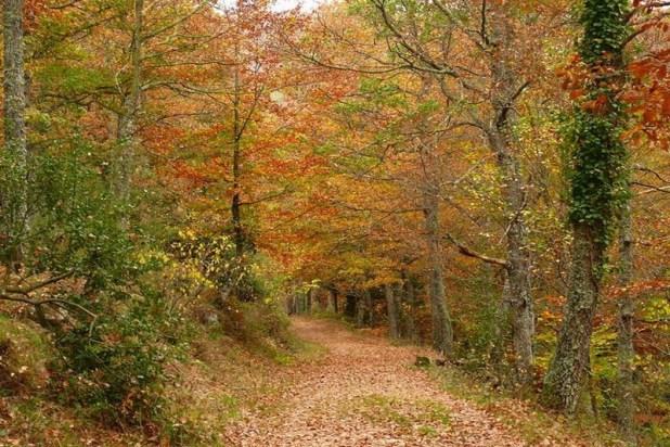 ruta por el Monte Hijedo