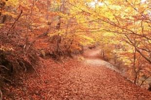 Tejera Negra en otoño