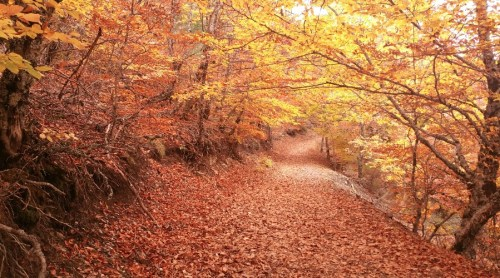 Tejera Negra en otoño. Mejores Bosques