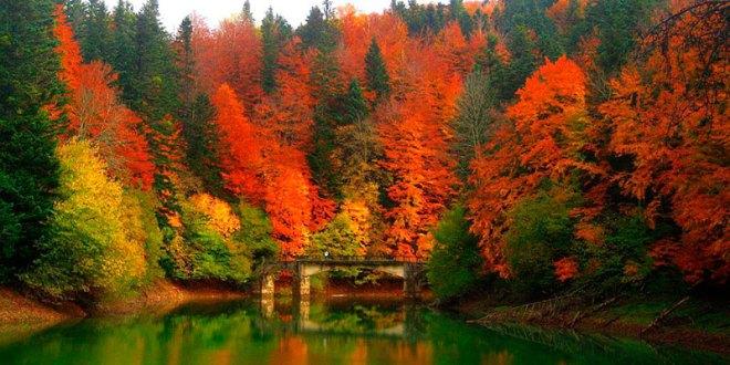 Selva de Iriati. Mejores Bosques