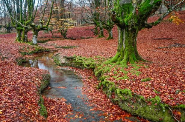 vista del Hayedo de Otzarreta en otoño