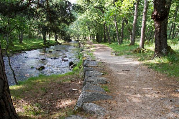 El río Eresma a su paso por el bosque de Valsaín