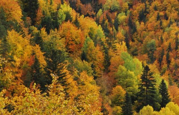 La Pardina del Señor en otoño
