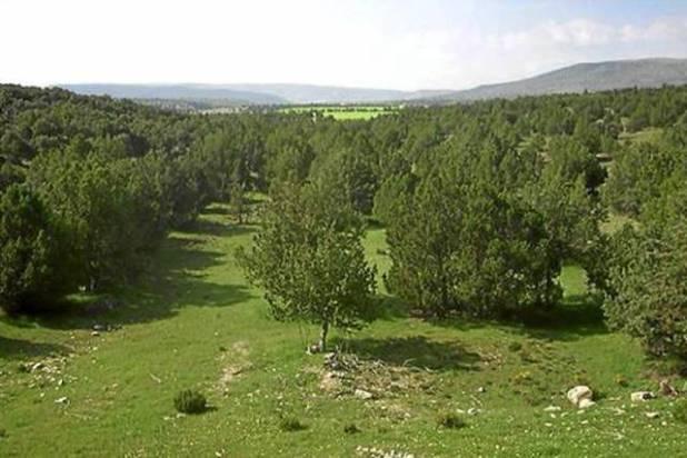 Sabinar de Monterde