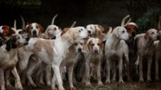 Perros & Mascotas