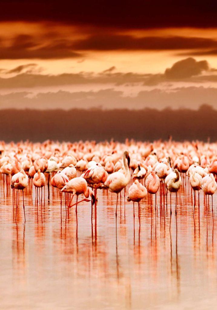 Lake Nakuru & Lake Naivasha
