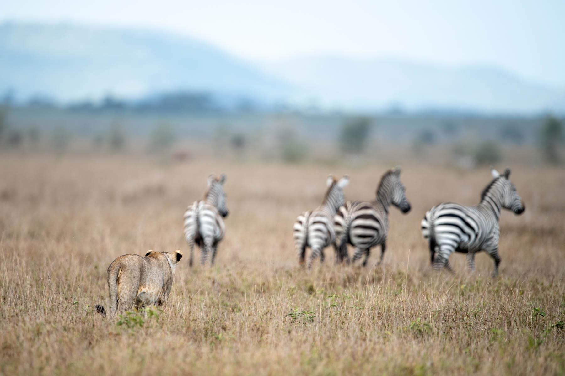 serengeti-10