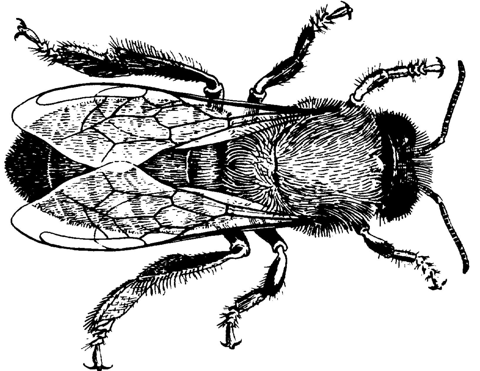 Beekeeping Basics Michael Bush