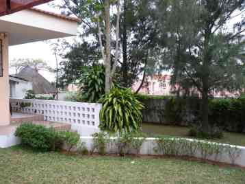 View of the garden and the casuarina tree where the trap was hanged at the end.
