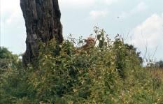 t-mara-intona-ranch-cheetah-001