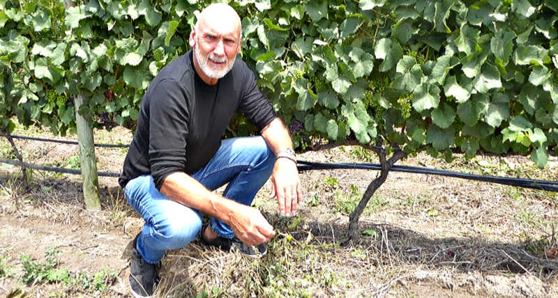 Andrew Gunn discovered an old apple farm in 1998. The rest is history. Taking advantage of this special cool area, Andrew and winemaker Werner Muller produce world class, elegant wines.