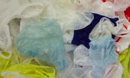 Does Banning Plastic Bags Help the Environment?