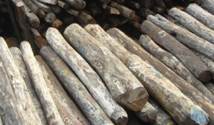 wood_Illegal_rosewood_stockpiles_002-Wikipedia_Carou