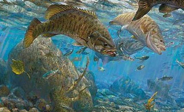 【全国】スモールマウスバスが釣れる場所(ポイント)【湖・沼・川】生息地【まとめ】