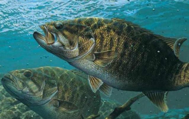 【東北地方】【福島県】で【スモールマウスバス】が釣れる場所(ポイント)檜原湖・阿武隈川