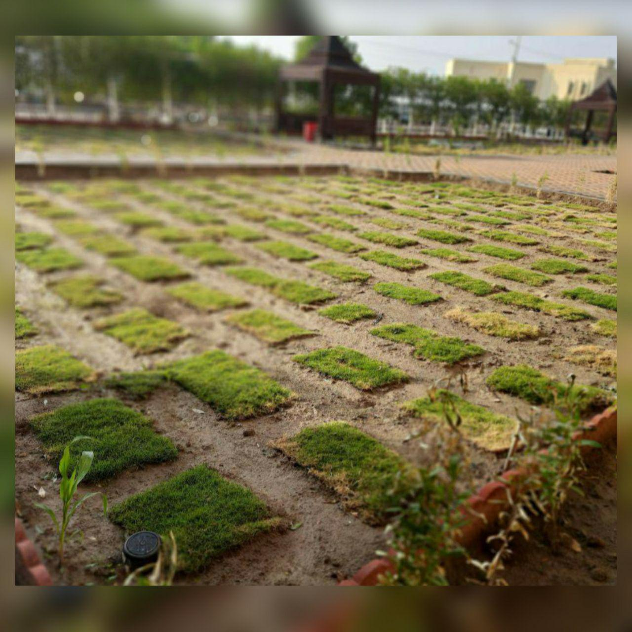 صيانة وترتيب الحدائق…