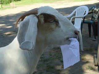 Half knowledge is lie goat eating a piece of paper