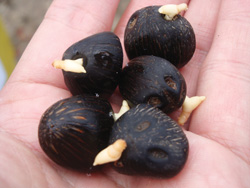 Pail oil seeds. Credit: R H Group