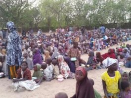 bornu, dangote foundation