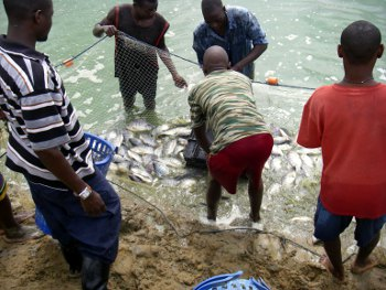 Rivers Government Has Set Aside N2billion For Its Farmers/fisherman Empowerment Programme Targeted At Mopping Up And Distributing Food Items To The People Of The State. Gov. Nyesom Wike, Who Made Th