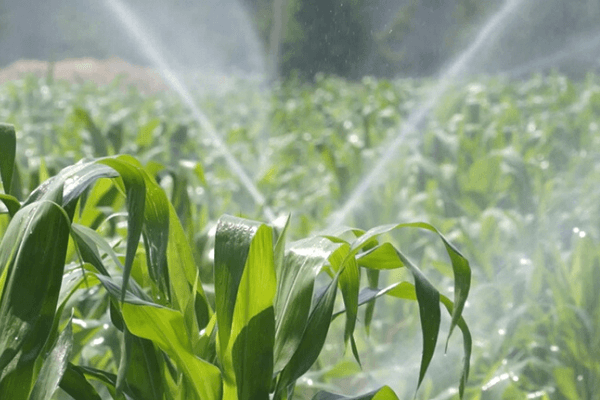 "FG, USAID launch $8mn ""water for agriculture"" project in North East - Businessday NG"