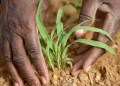 OCP Africa partners universities to deepen agric education - Businessday NG