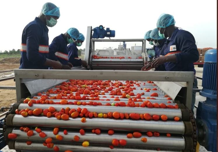 How GBfoods completed N20bn tomato processing factory in Nigeria - Businessday NG