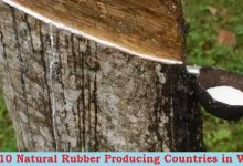 Rubber Producing Countries
