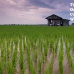 rice producing countries