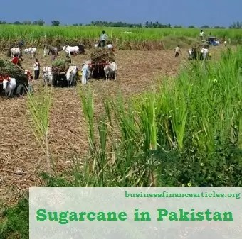 sugarcane in pakistan