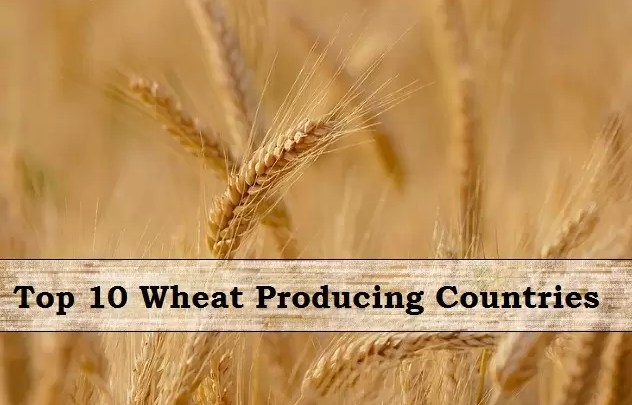 wheat producing countries