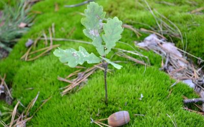 """""""Mighty oaks from little acorns grow."""" – English proverb"""